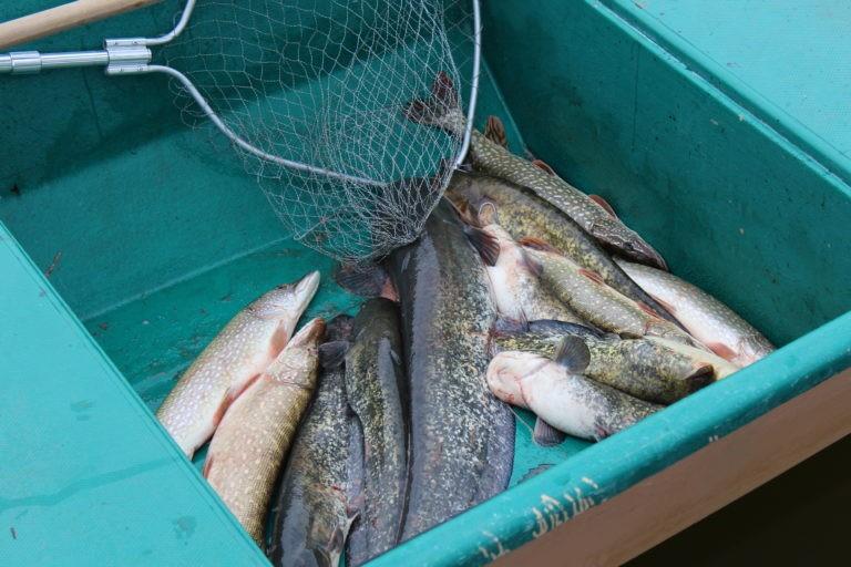 рыбалка16